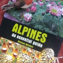 Christmas pressies with an Alpine flavour