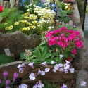 Alpines from around the globe