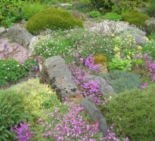 Slack Top Rock Garden in June