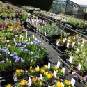 Alpine benches full to bursting!